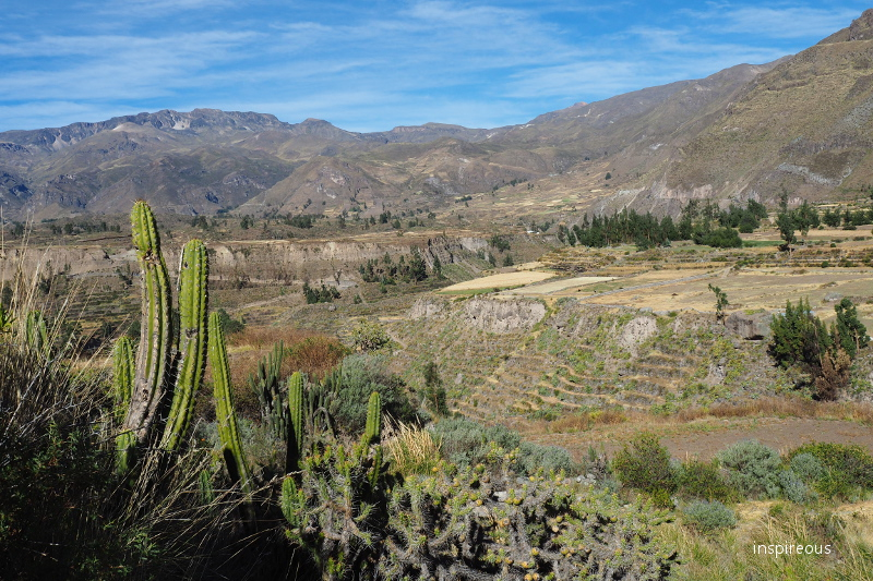colca valley - Peru